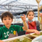 採って、食べて、海ぶどうを子どもと一緒に120%満喫できる海ぶどう農園