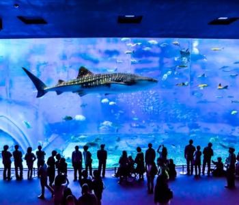 人氣觀光景點「美麗海水族館」享受2倍的享樂方法♪
