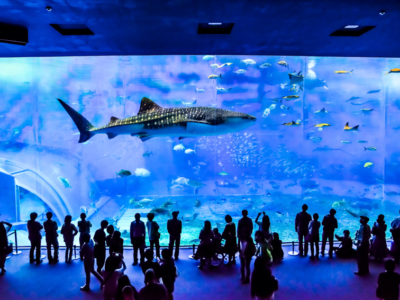 How you can double your fun at a popular tourist spot, the 'Okinawa Churaumi Aquarium' ♪