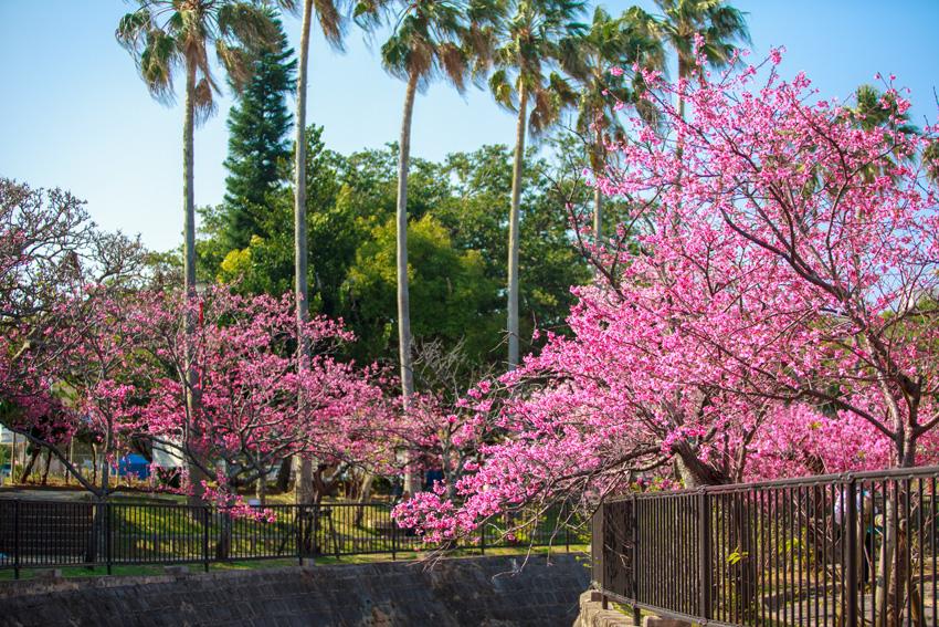 見頃 2021 桜