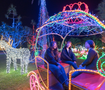毎年恒例!沖縄の冬を楽しむなら必ず行きたい「東南植物楽園」のひかりの散歩道☆