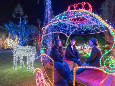 매년 개최! 오키나와의 겨울을 즐긴다면 꼭 가고 싶은「동남식물원」빛의 산책로☆