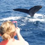 【エリア別】沖縄でクジラに会いに行こう!ホエールウォッチングができる施設7選