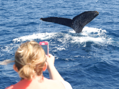 【エリア別】沖縄でクジラに会いに行こう!ホエールウォッチングができる施設8選