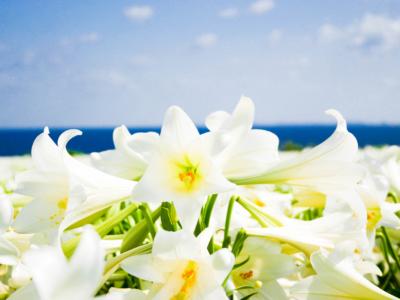 【春季活動】搭乘一日中文巴士前往沖縄的「伊江島百合花祭典」吧!