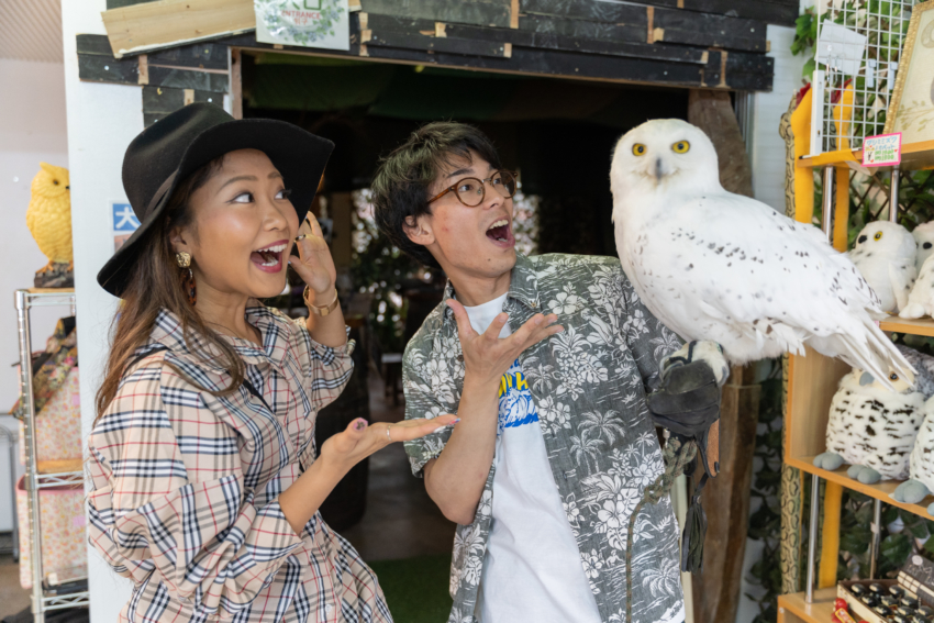 A glowing Okinawa SNS spot where you can touch owls! |OkinawaHolidayHackers