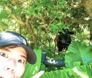 人より牛が多い?!石垣島からフェリーで30分の黒島を自転車で1周してみたぞ~!