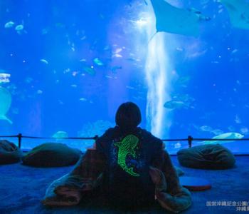 【1/12~2/28 기간 한정】츄라우미 수족관이 밤 21시까지 오픈! 「츄라우미 나이트 아쿠아리움」