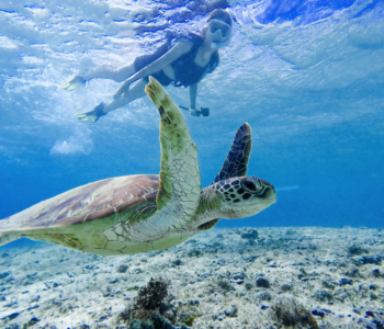 【High Encounter Rate】The Snorkeling with Sea Turtles Experience in Miyakojima!