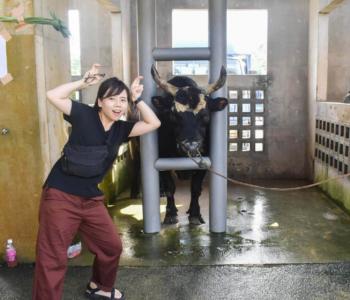 【沖縄娯楽】うるま市の闘牛大会を観戦!